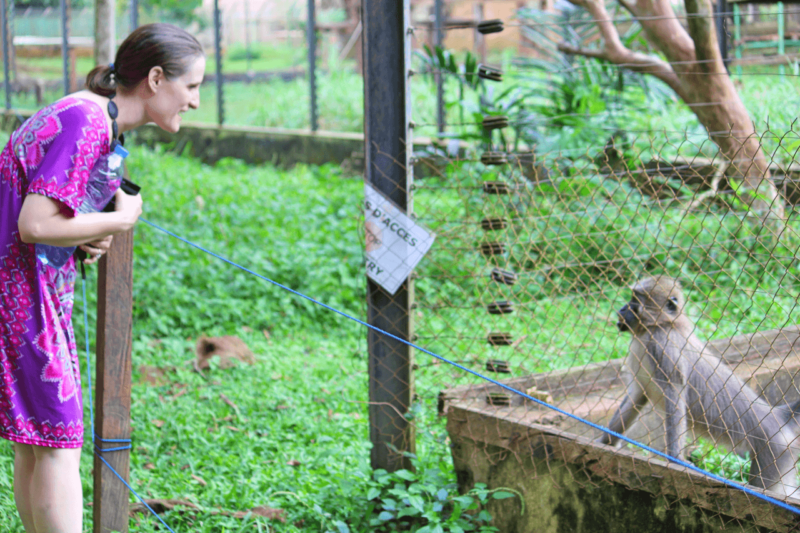Mvog-Betsi Zoo Yaounde Cameroon Tourism Family Friendly Activity Mandrills Mangabey Lions