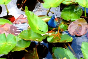 Everglades National Park Miami Dade Florida