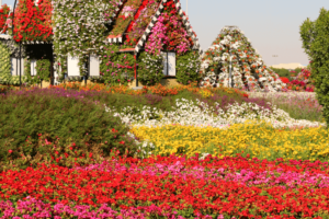 Dubai Miracle Garden United Arab Emirates Tourism Activity